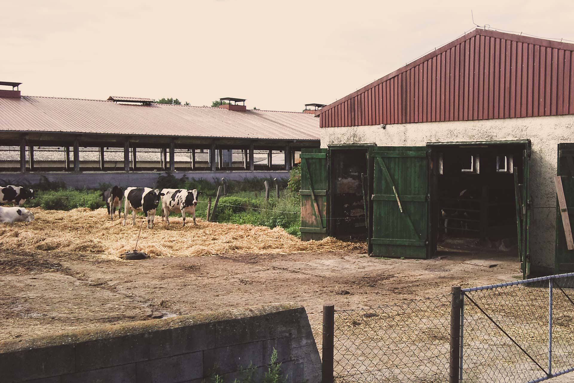 Wenn es auf den Feldern schon mal zu eng wird, muss halt der Hof zur Tierhaltung herhalten.