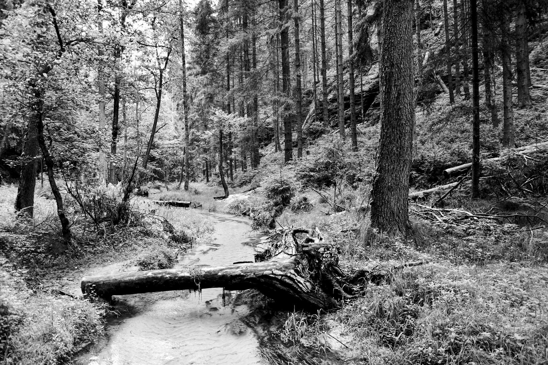 Was fällt bleibt liegen im Nationalpark Sächsisch-Böhmische Schweiz