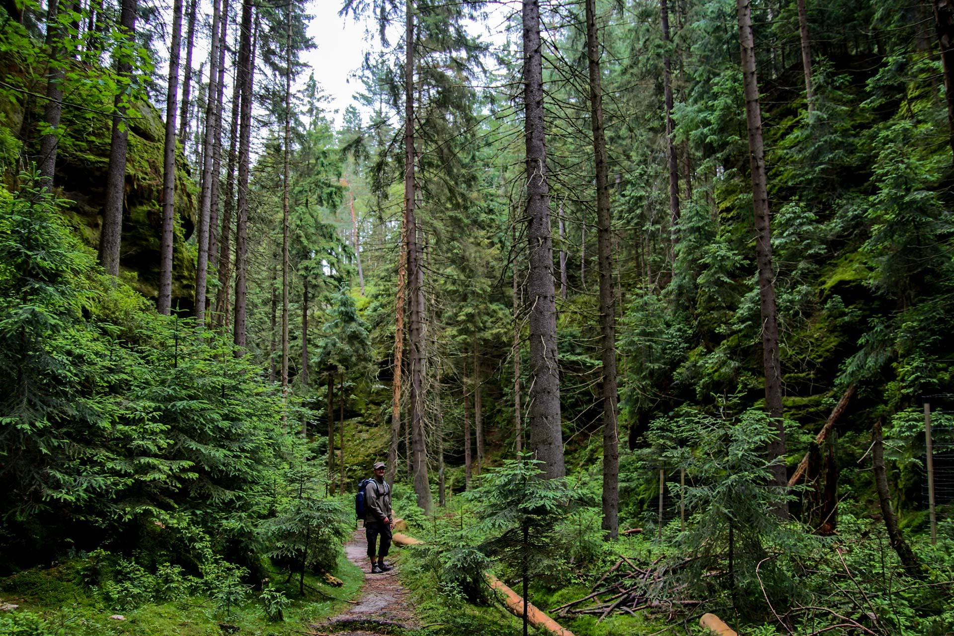 Dichte, unberührte Wälder inmitten des Nationalparks.