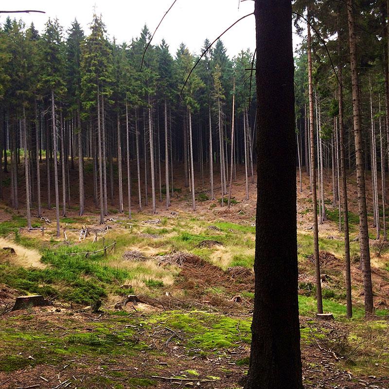 Über Stock und Stein, durch Wald und Flur geht es auch am letzten Tag unserer Wanderung durchs Lausitzer Gebirge.