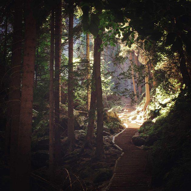 Durch tiefe Wälder und dicht stehende Felsen wird ausreichend Schatten gespendet.