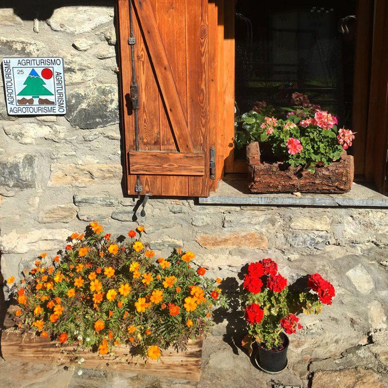 Spätherbstliche Pflanzenpracht im Agriturismo Lo Sabot in Rhêmes-Notre-Dame