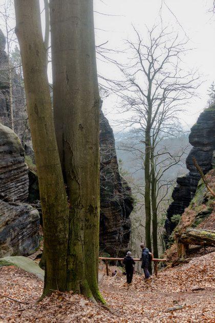 Vom Brand führen über 177 Stufen, zwei Eisenleitern und unzählige Absätze steil ins Tal des Tiefen Grund