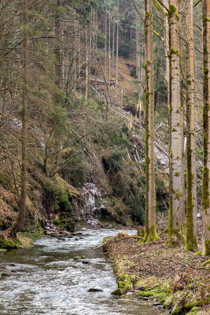 Sturmtief Friederike hinterließ ihre Spuren: entwurzelte Bäume auf dem Wanderweg.