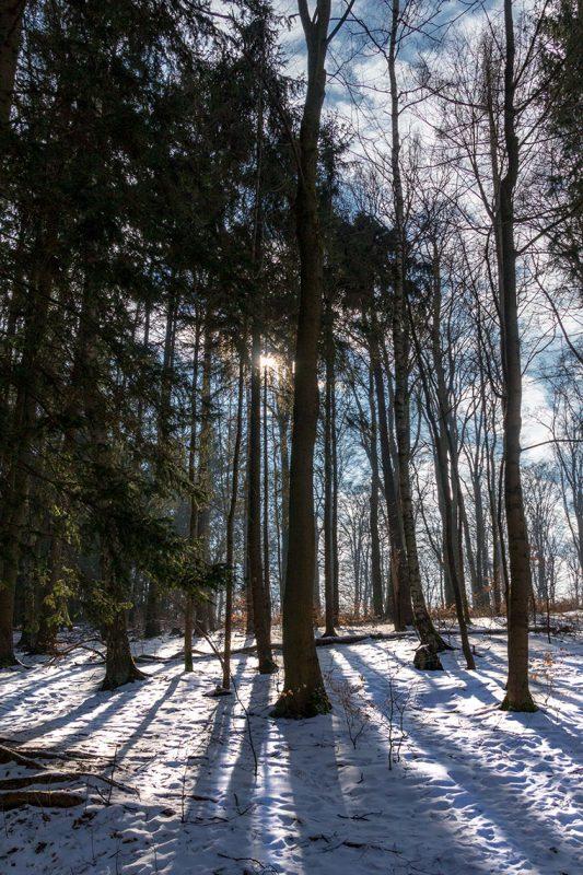 Noch ist der Boden mit kaltem Weiß bedeckt. Doch die Sonne bringt schon Kraft und Wärme in den Wald.