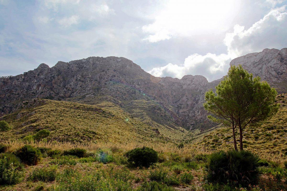 Nicht nur in der Serra de Tramuntana kann man vorzüglich wandern. Auch der Nordosten Mallorca's kennt wunderschöne Wege.
