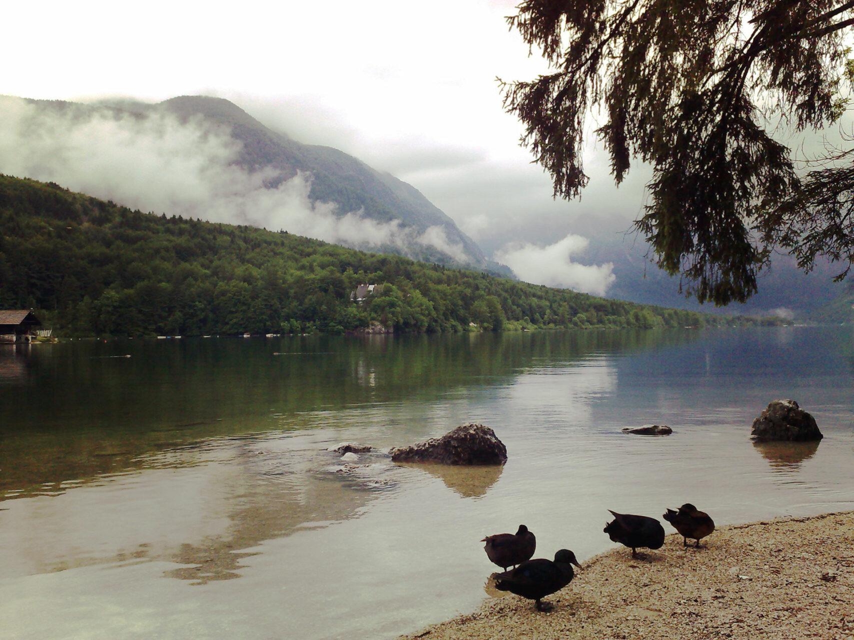 Am Bohinjsko jezero. Quasi der Ausgangssee der Sieben-Seen-Tour...