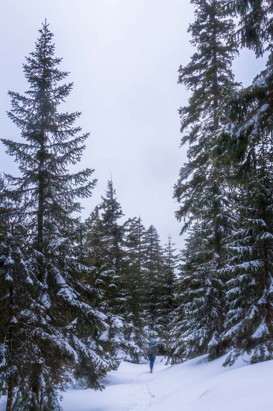 Tief verschneite Wälder und zugefrorene Bäche – im Riesengebirge sind die Winter hart.