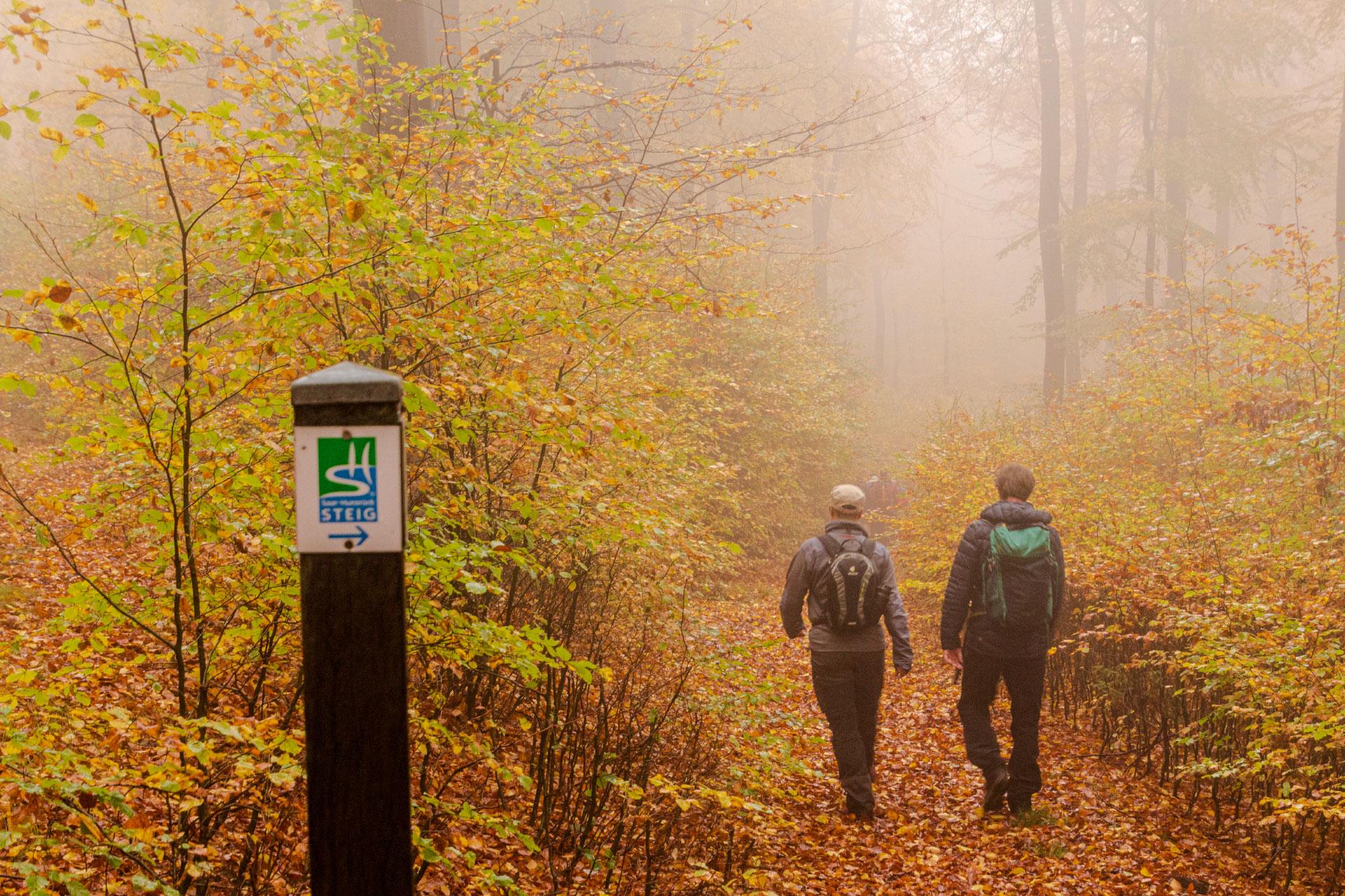 Auf dem Saar-Hunsrück-Steig durch den Nebel und den Urwald von Morgen