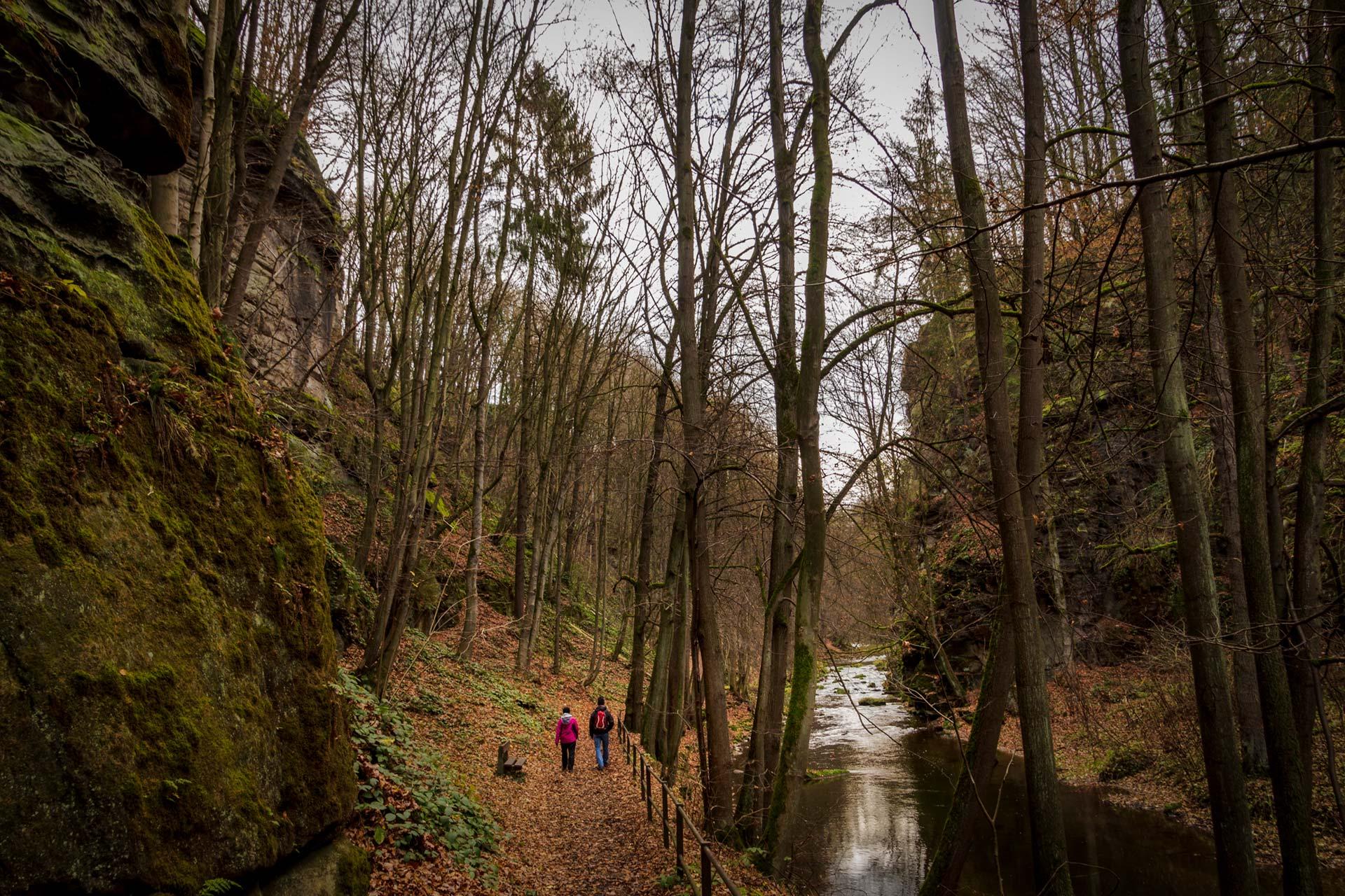 Entlang des Flüsschens Wesenitz führt der Malerweg immer tiefer in den Liebethaler Grund.