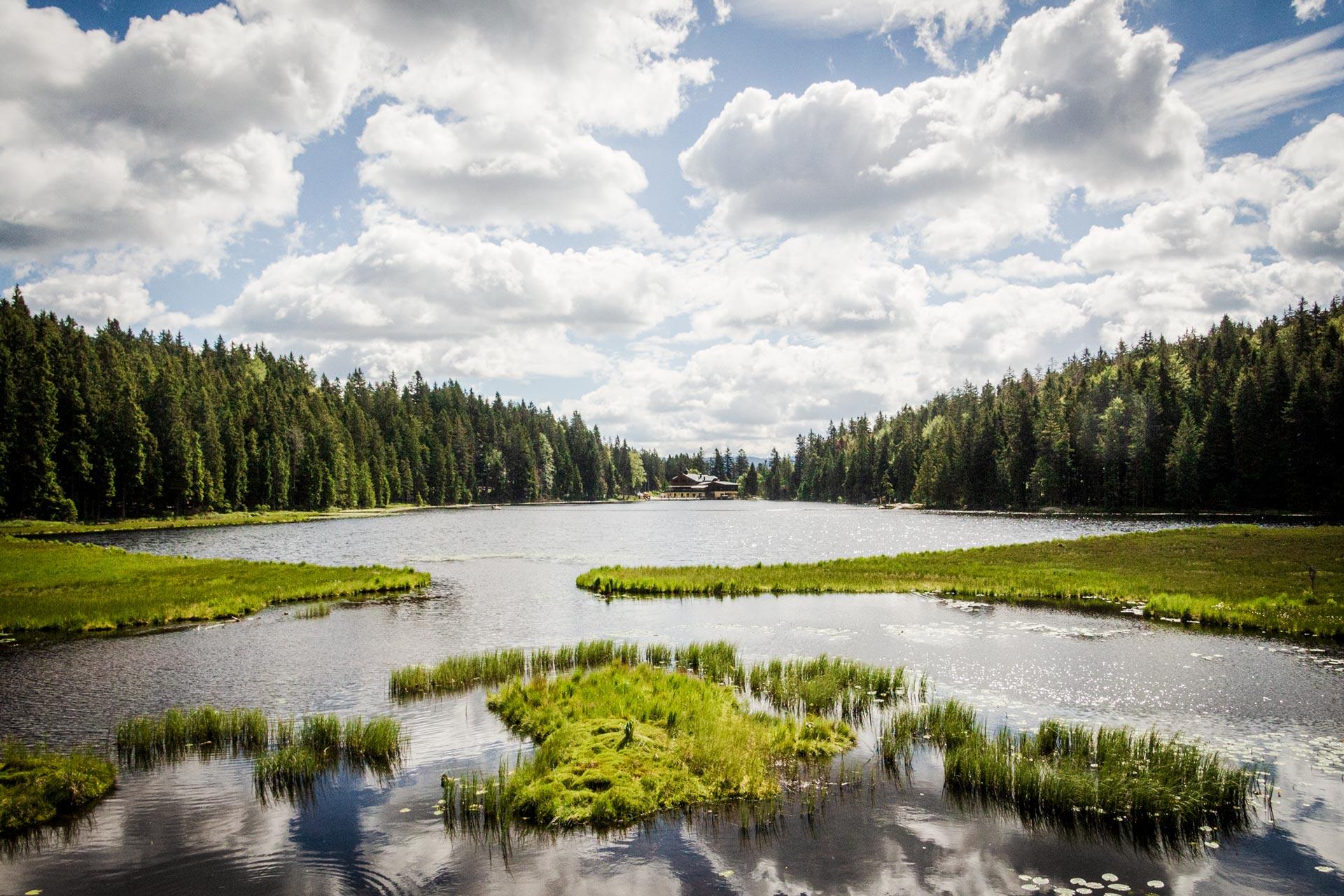 Großer Arbersee   Eine Umrundung kostet zwei Kilometer Zeit, bietet aber im Gegenzug vielerlei Eindrücke