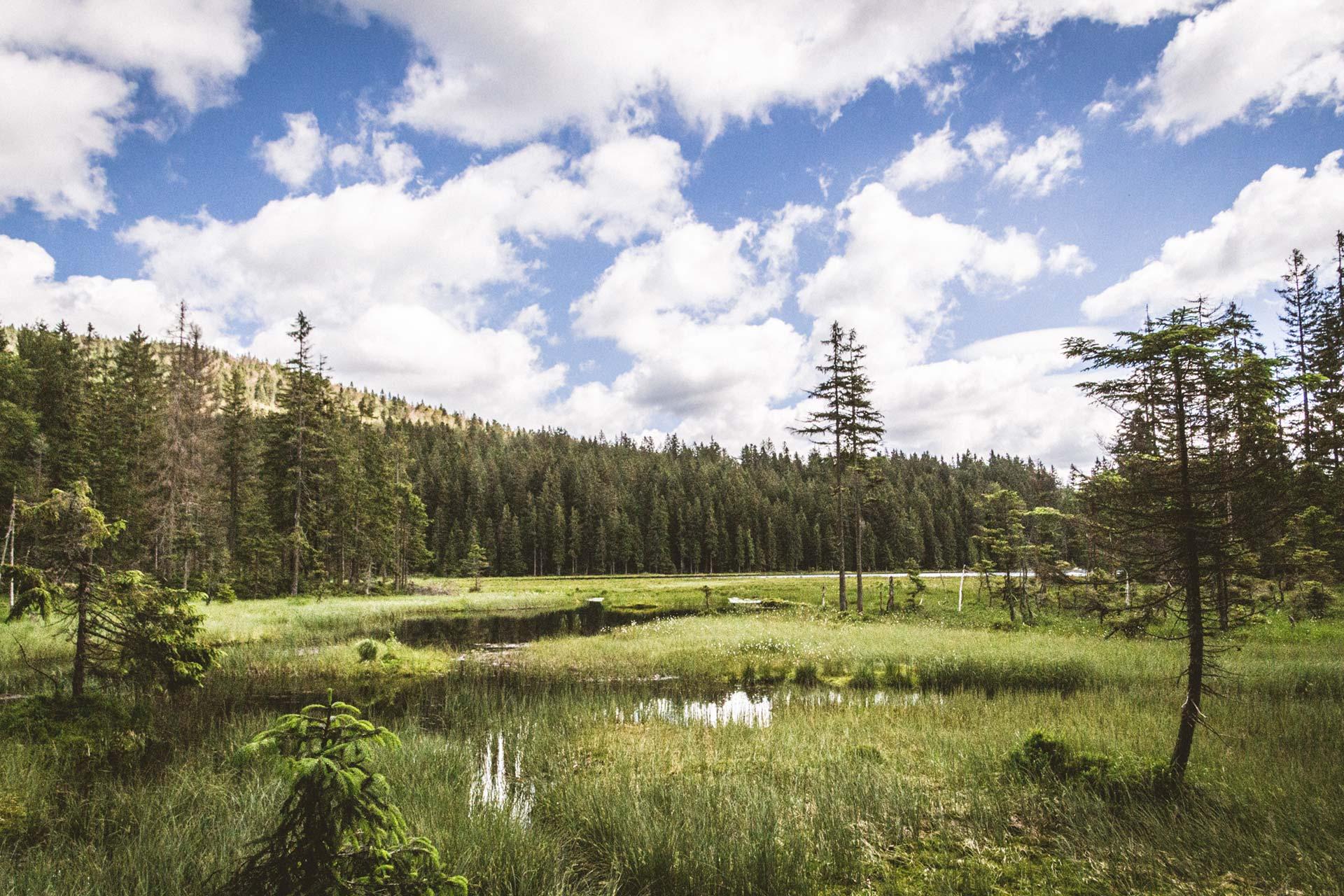Fürs Warmlaufen oder Spaziergehen – eine Umrundung des Großen Arbersees verspricht Brandenburger Eindrücke im Bayerischen Wald