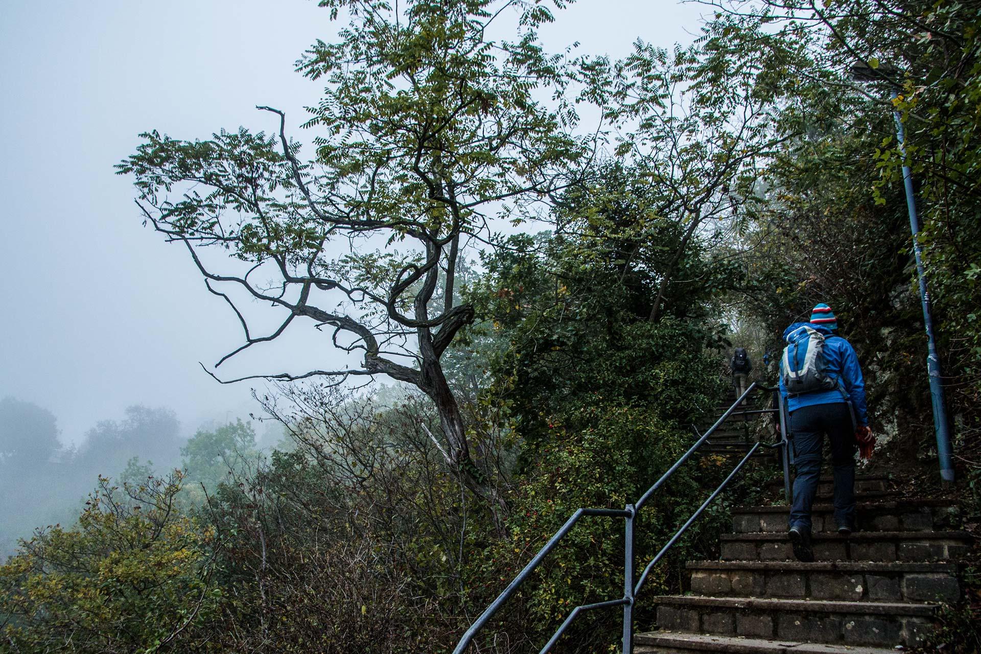 Vom Rhein führt der Weg die steilen Hänge zur Loreley hinauf. Und damit tiefer in den Nebel. Oder doch schon Wolken?