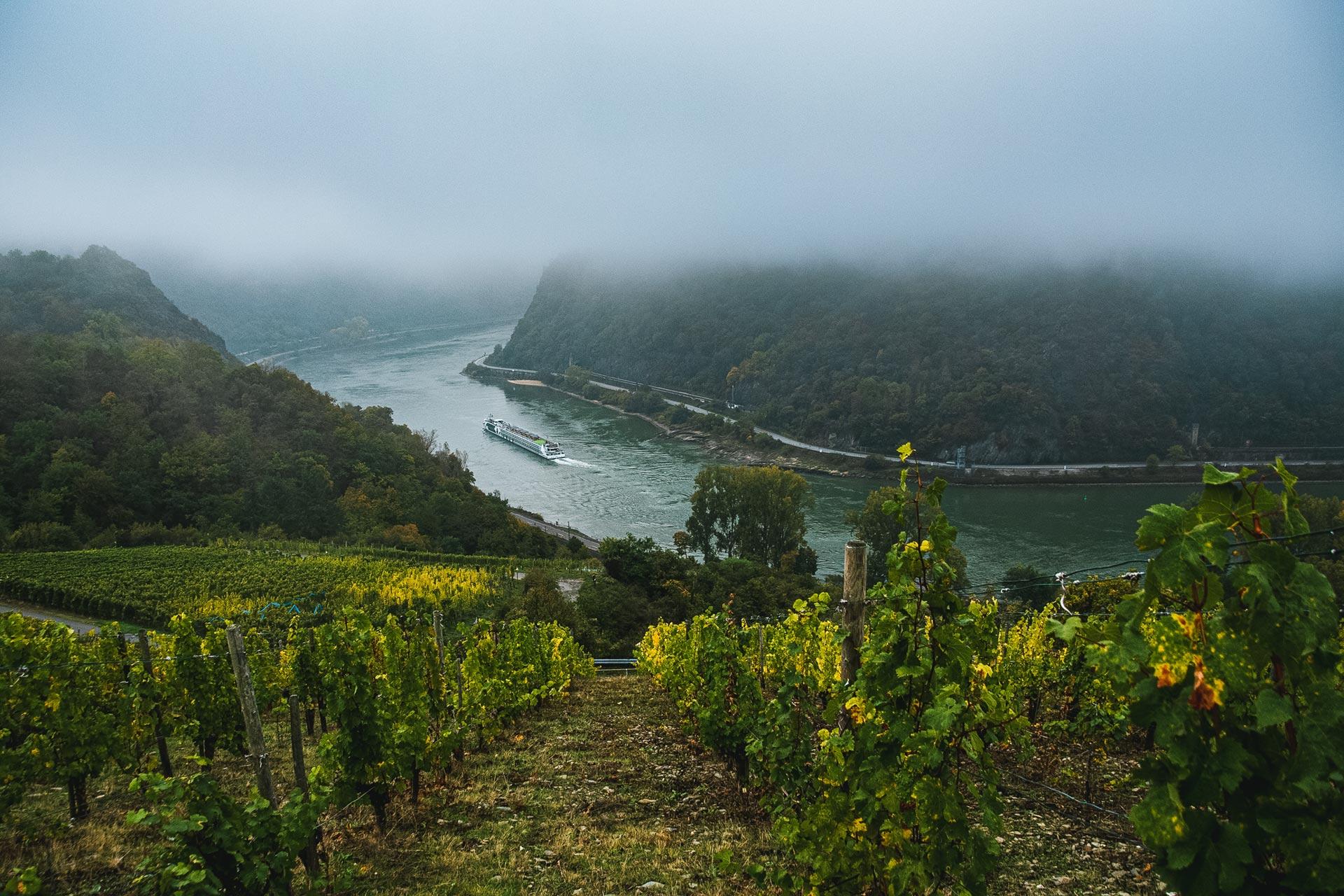 Oberhalb des Rheins inmitten der Weinhänge – Rheinsteig Loreley verzaubert.