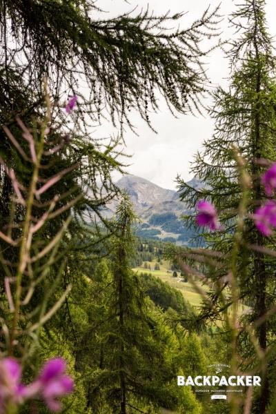 Durch Bäume und Gestrüpp ein schneller Blick zum Colle Pinter.