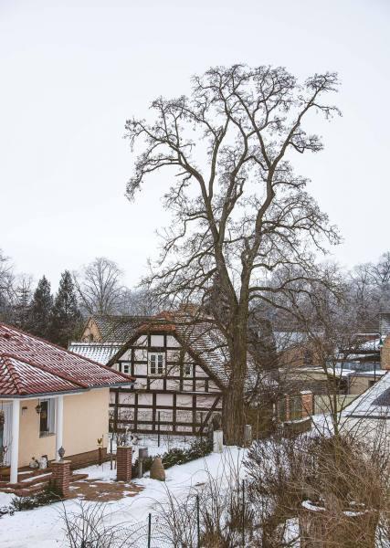 2021_tB_Winterland_Oderbruch_12