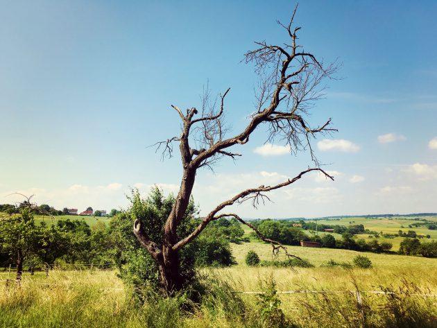 Weite Wiesen bei Eschau unterbrechen die dichten Wälder des Spessarts.