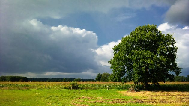 Im Schutz des Baumes rostet ein alter Traktor geduldig vor sich hin.