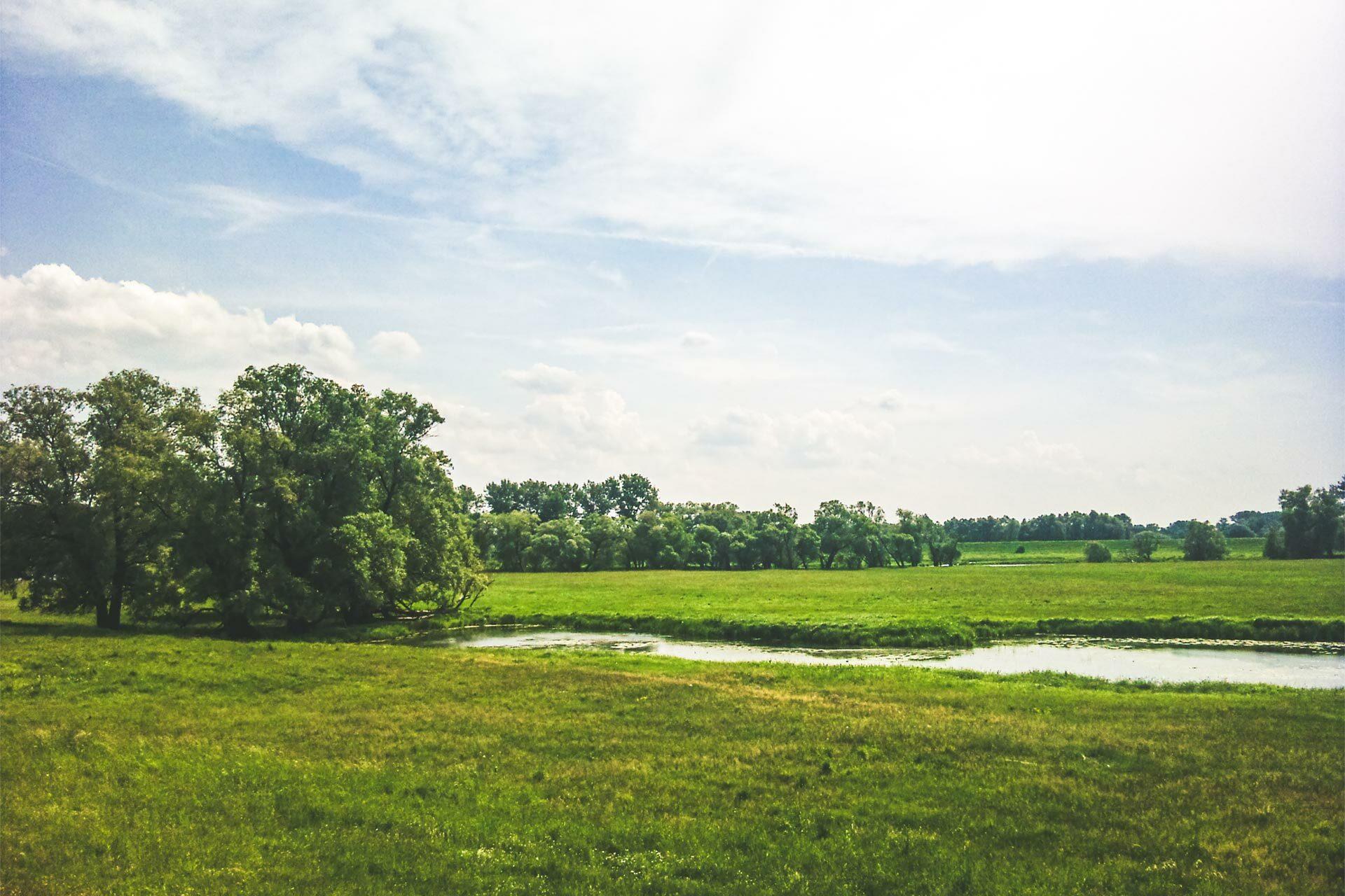 Im Mündungsgebiet der Havel in die Elbe. Sattes grün und blauer Himmel, da hüpft das Herz und staunt der Wandersmann.