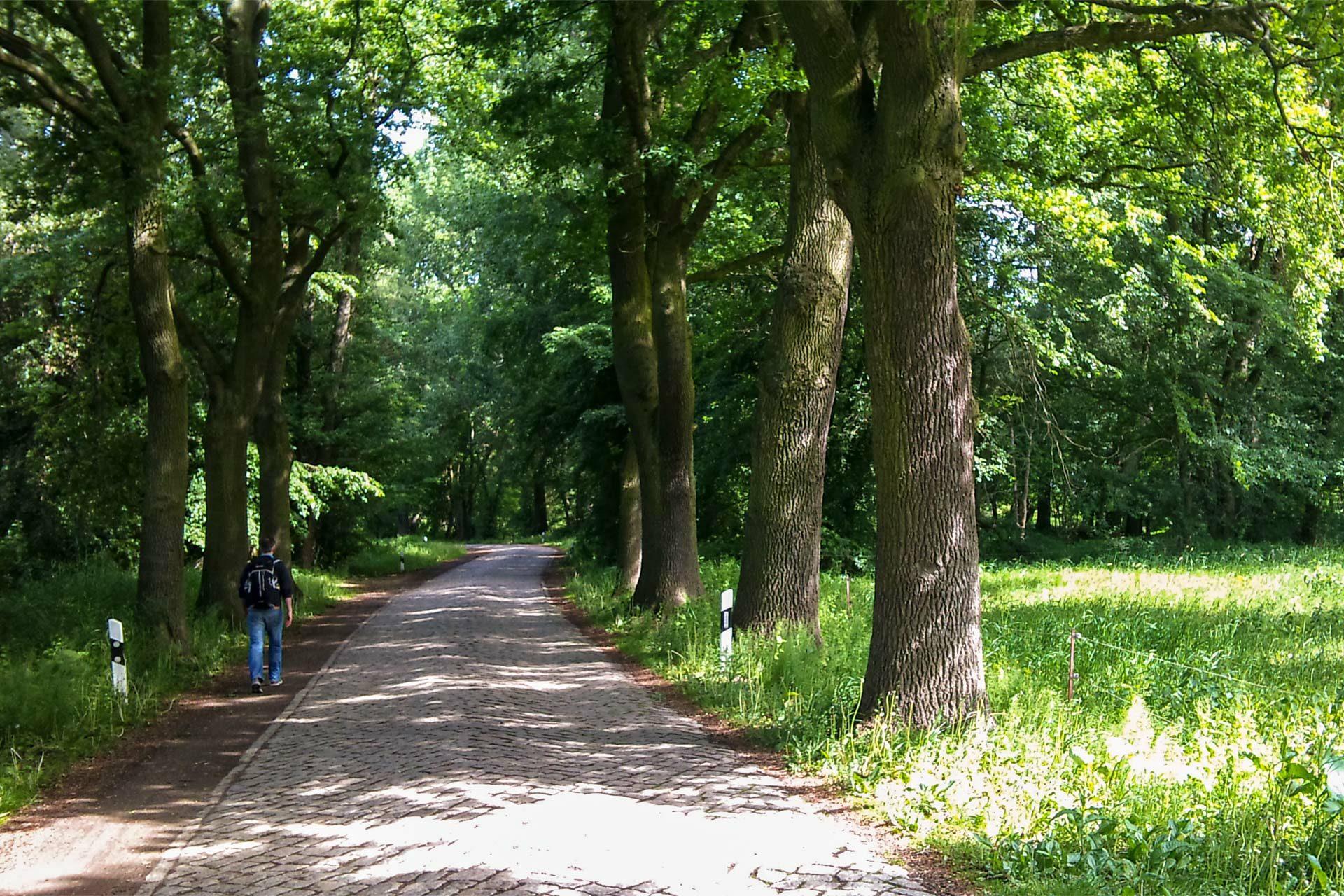 Immer entlang des Elbe-Rad-Wegs – mal an der Elbe, mal abseits von ihr.