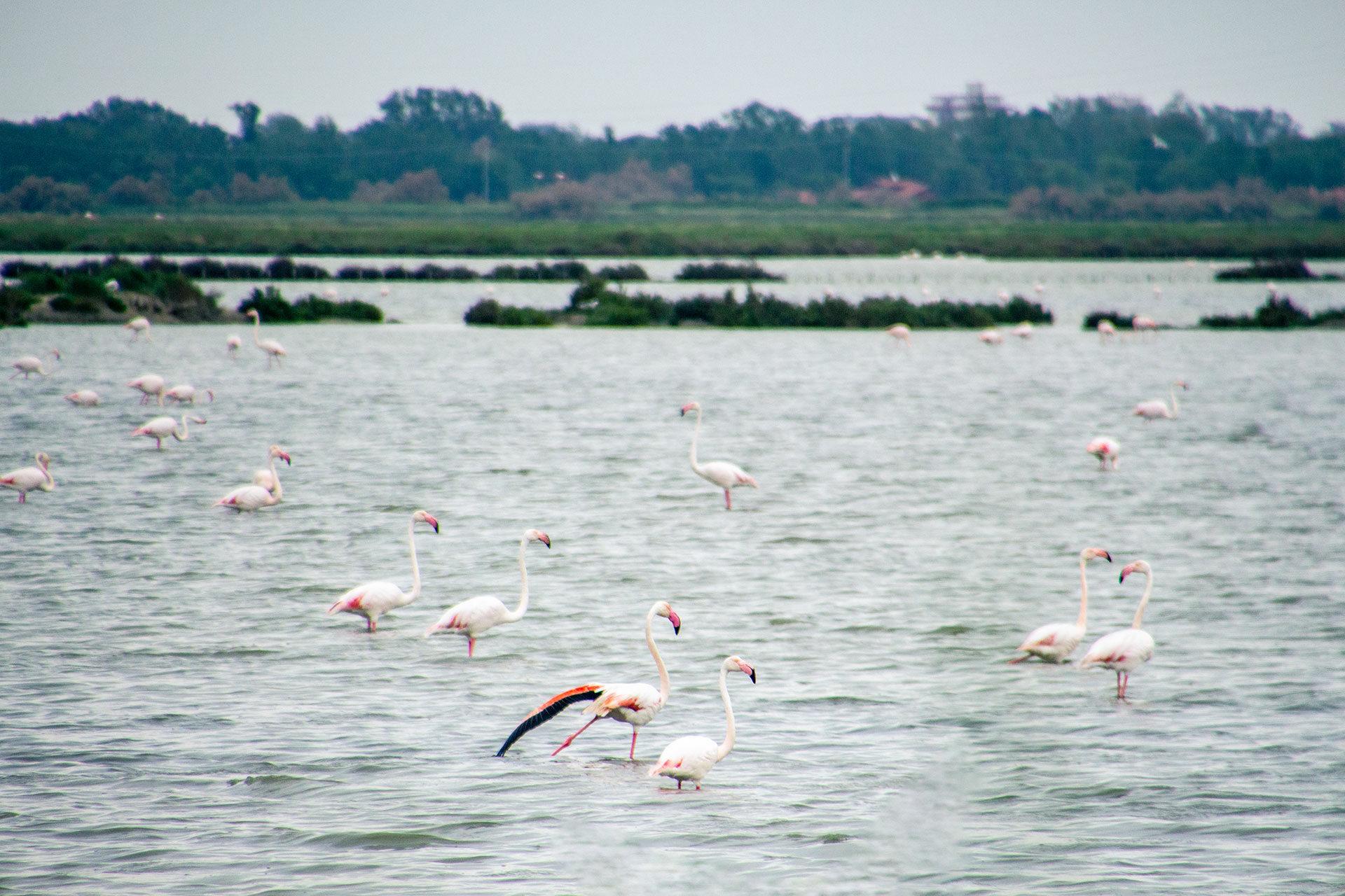 Einzigartige Tierwelt: selbst Flamingos kann man im Valle di Comacchio beobachten.