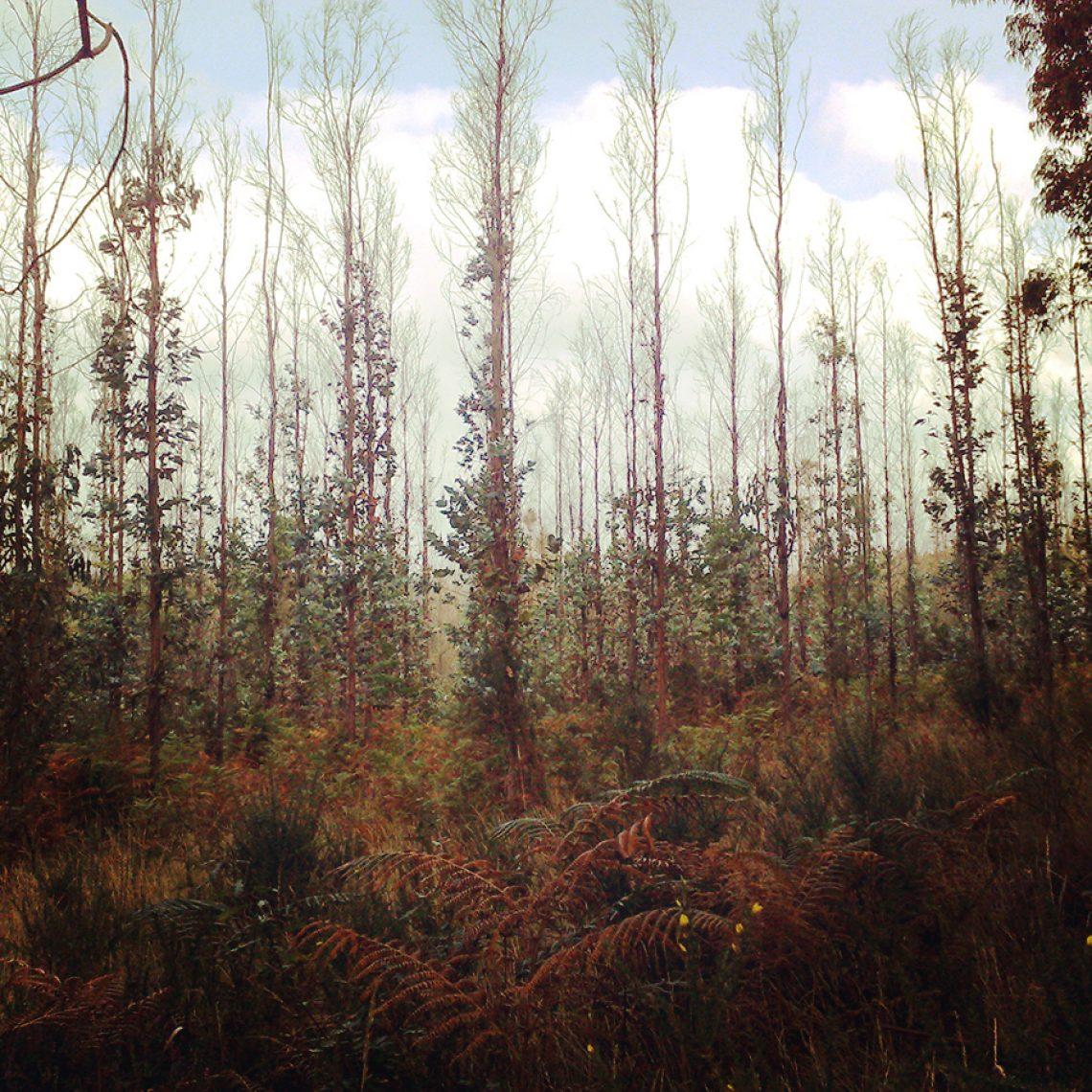 Grafisches Kabinettstückchen aus galizischem Wald.